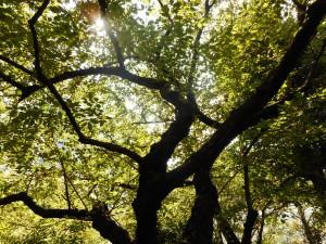 お墓のそばにある樹