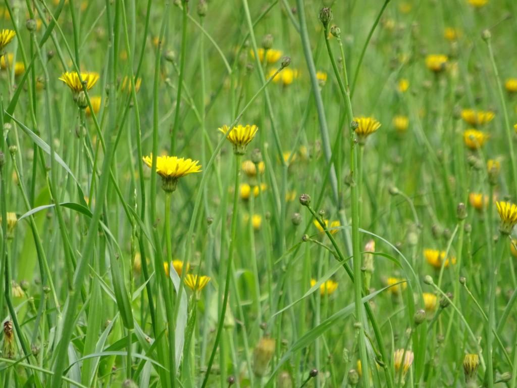 野の花のアップ
