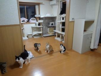 猫ひっかき防止 内装リフォーム 施工後