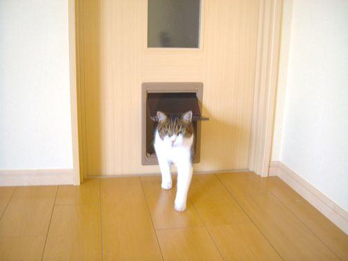 ペットドア Pet Door Japaneseclass Jp